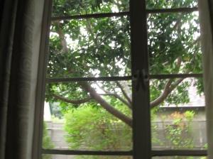 rainy window 2